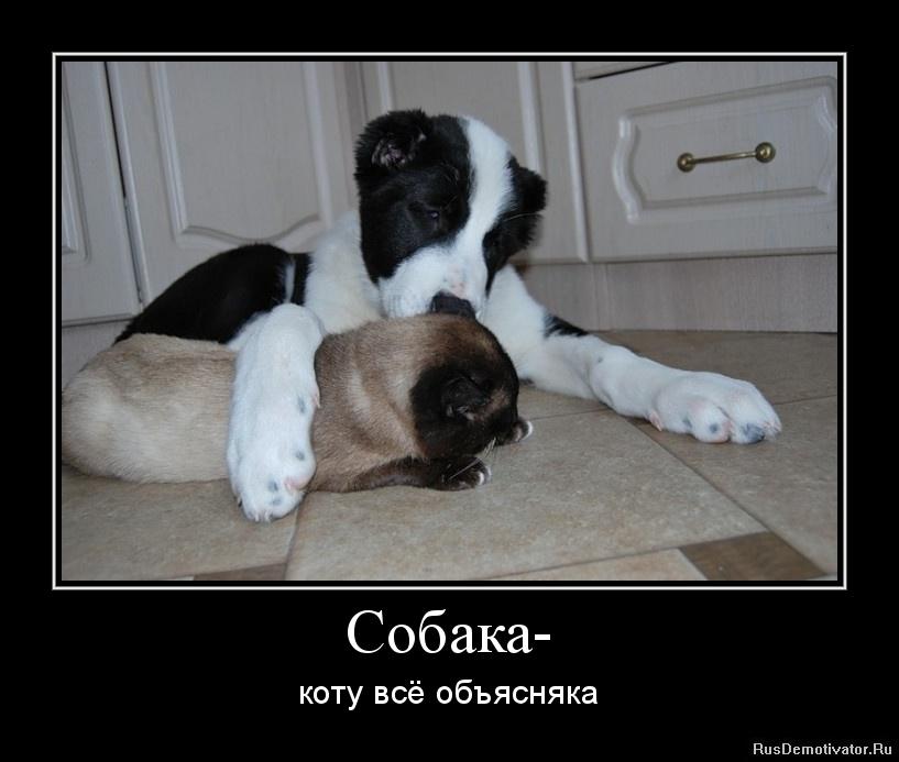 Собака- - коту всё объясняка.