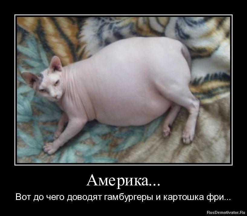 толстый сфинкс.