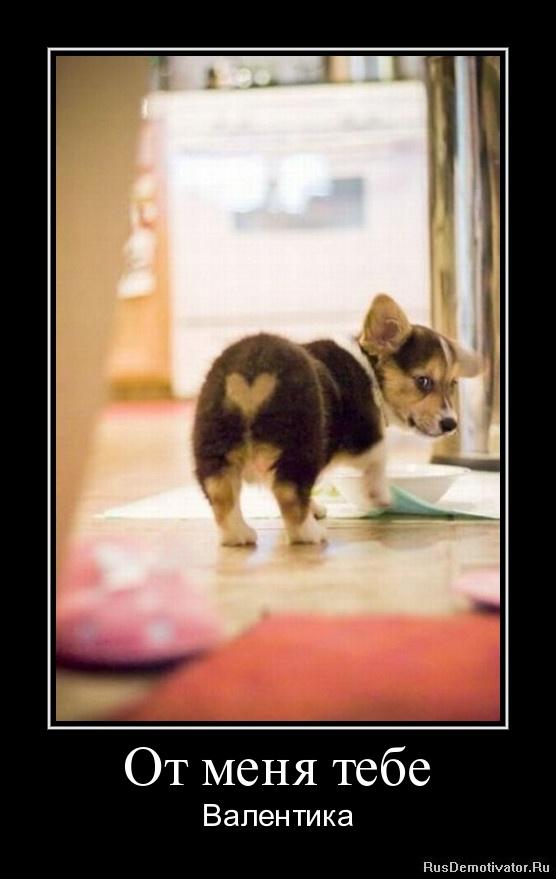 Демотиваторы про животных → от меня